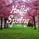 Hello Spring Flower image Free Download