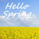 Hello Spring Flowers image Free Download