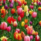 Hello Spring Purple Flowers Free Download